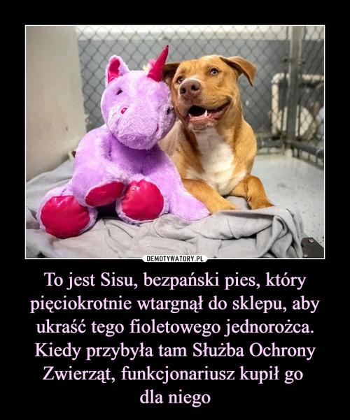 To jest Sisu, bezpański pies, który pięciokrotnie wtargnął do sklepu, aby ukraść tego fioletowego jednorożca. Kiedy przybyła tam Służba Ochrony Zwierząt, funkcjonariusz kupił go  dla niego