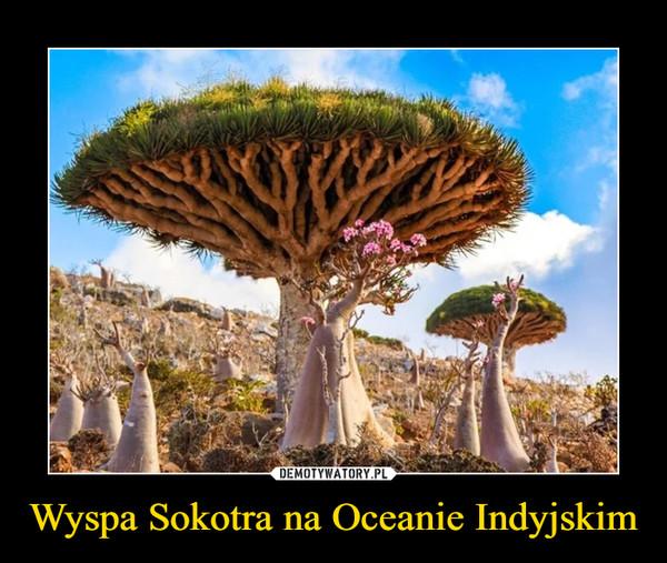 Wyspa Sokotra na Oceanie Indyjskim –