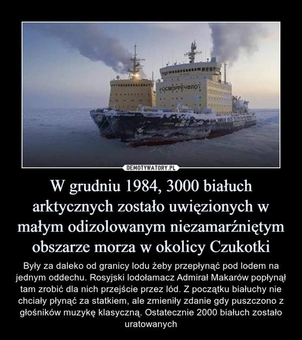 W grudniu 1984, 3000 białuch arktycznych zostało uwięzionych w małym odizolowanym niezamarźniętym obszarze morza w okolicy Czukotki – Były za daleko od granicy lodu żeby przepłynąć pod lodem na jednym oddechu. Rosyjski lodołamacz Admirał Makarów popłynął tam zrobić dla nich przejście przez lód. Z początku białuchy nie chciały płynąć za statkiem, ale zmieniły zdanie gdy puszczono z głośników muzykę klasyczną. Ostatecznie 2000 białuch zostało uratowanych