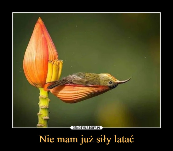 Nie mam już siły latać –