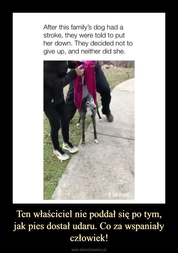 Ten właściciel nie poddał się po tym,jak pies dostał udaru. Co za wspaniały człowiek! –