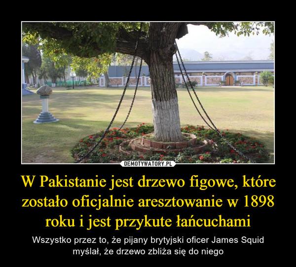 W Pakistanie jest drzewo figowe, które zostało oficjalnie aresztowanie w 1898 roku i jest przykute łańcuchami – Wszystko przez to, że pijany brytyjski oficer James Squidmyślał, że drzewo zbliża się do niego