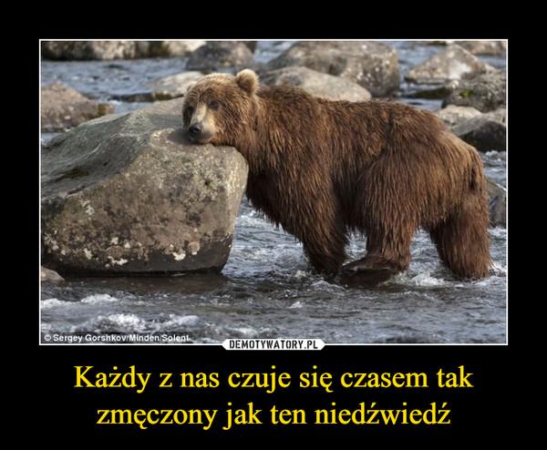Każdy z nas czuje się czasem tak zmęczony jak ten niedźwiedź