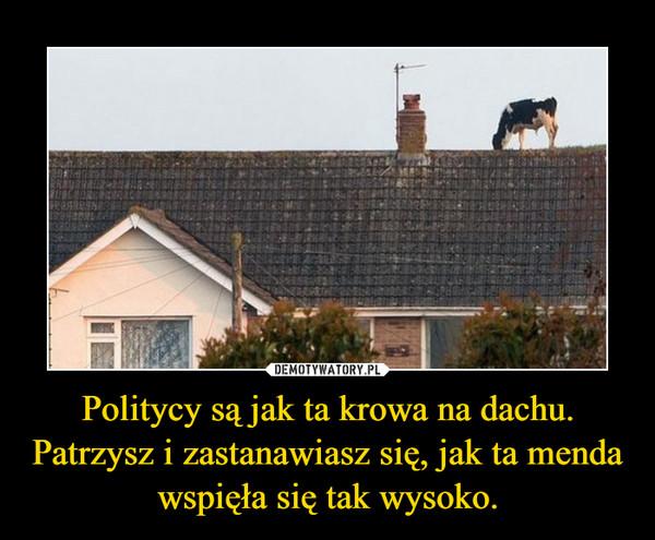 Politycy są jak ta krowa na dachu. Patrzysz i zastanawiasz się, jak ta menda wspięła się tak wysoko. –