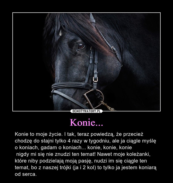 Konie... – Konie to moje życie. I tak, teraz powiedzą, że przecież chodzę do stajni tylko 4 razy w tygodniu, ale ja ciągle myślę o koniach, gadam o koniach... konie, konie, konie  nigdy mi się nie znudzi ten temat! Nawet moje koleżanki, które niby podzielają moją pasję, nudzi im się ciągle ten temat, bo z naszej trójki (ja i 2 kol) to tylko ja jestem koniarą od serca.