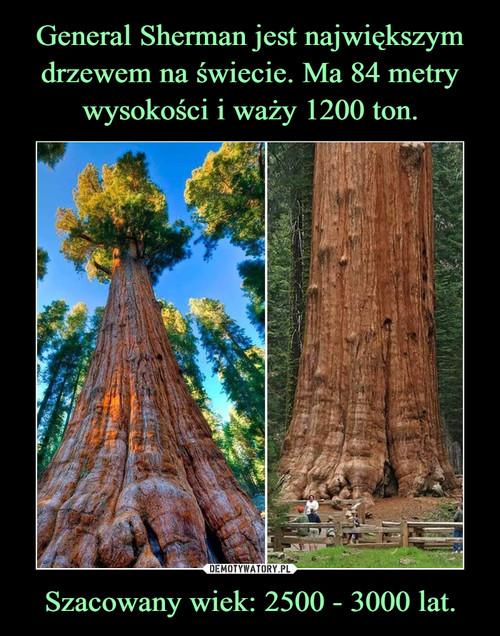 General Sherman jest największym drzewem na świecie. Ma 84 metry wysokości i waży 1200 ton. Szacowany wiek: 2500 - 3000 lat.
