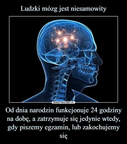 Ludzki mózg jest niesamowity Od dnia narodzin funkcjonuje 24 godziny na dobę, a zatrzymuje się jedynie wtedy, gdy piszemy egzamin, lub zakochujemy się