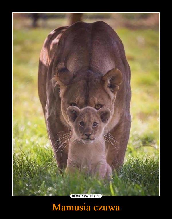 Mamusia czuwa –