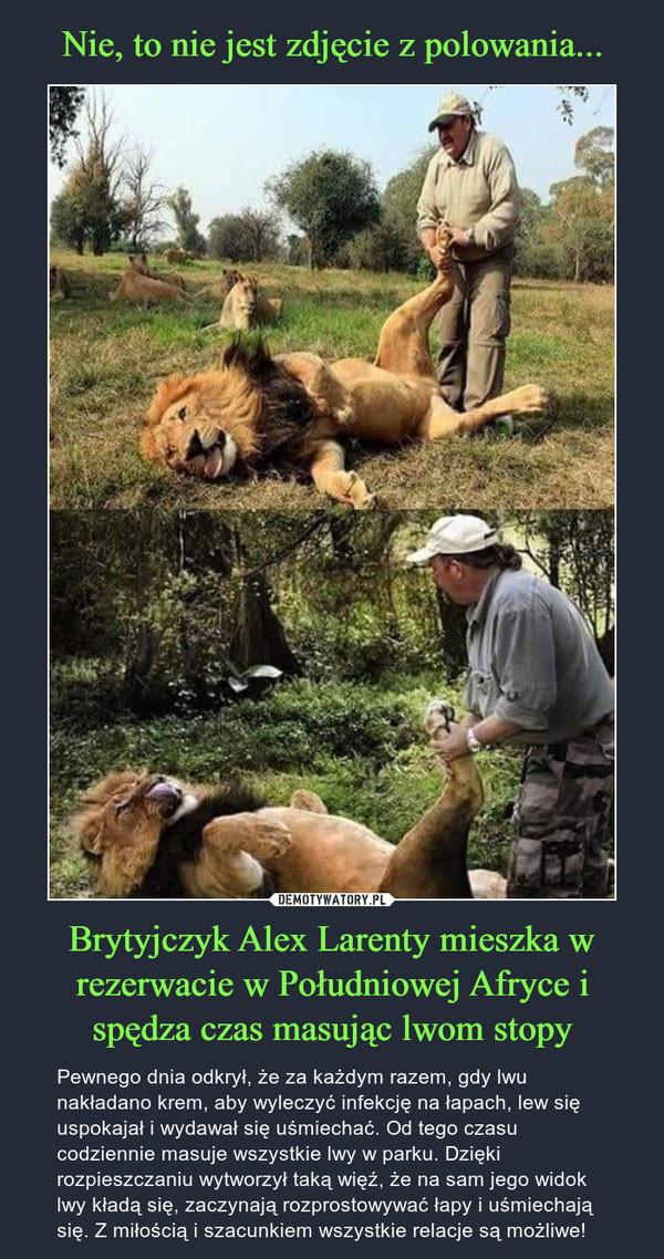 Brytyjczyk Alex Larenty mieszka w rezerwacie w Południowej Afryce i spędza czas masując lwom stopy – Pewnego dnia odkrył, że za każdym razem, gdy lwu nakładano krem, aby wyleczyć infekcję na łapach, lew się uspokajał i wydawał się uśmiechać. Od tego czasu codziennie masuje wszystkie lwy w parku. Dzięki rozpieszczaniu wytworzył taką więź, że na sam jego widok lwy kładą się, zaczynają rozprostowywać łapy i uśmiechają się. Z miłością i szacunkiem wszystkie relacje są możliwe!