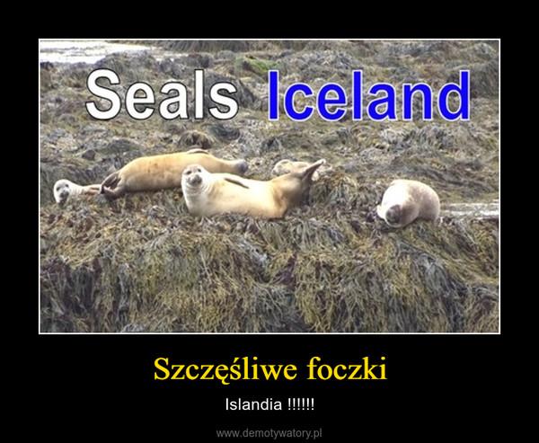 Szczęśliwe foczki – Islandia !!!!!!