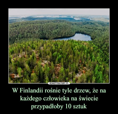 W Finlandii rośnie tyle drzew, że na każdego człowieka na świecie przypadłoby 10 sztuk