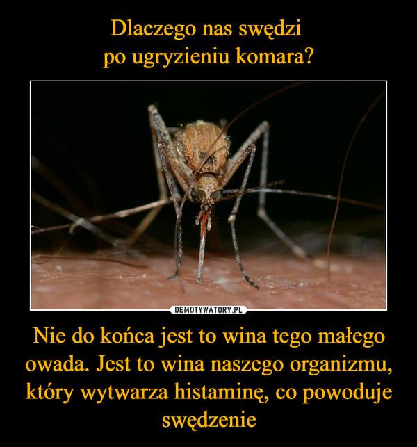 Nie do końca jest to wina tego małego owada. Jest to wina naszego organizmu, który wytwarza histaminę, co powoduje swędzenie –