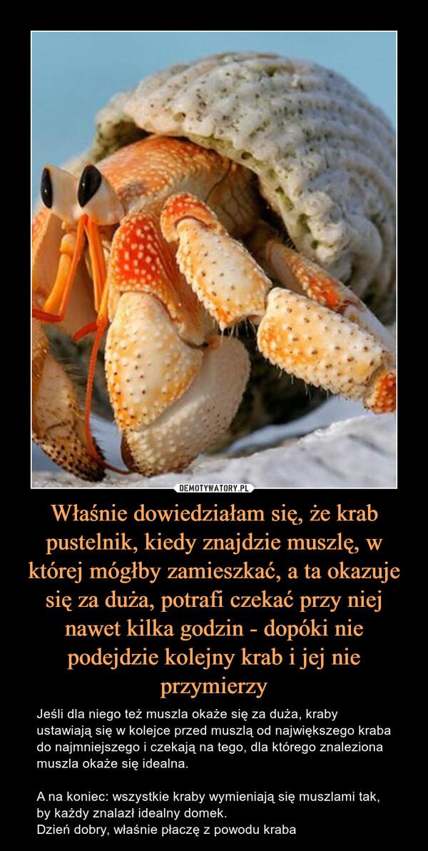 Właśnie dowiedziałam się, że krab pustelnik, kiedy znajdzie muszlę, w której mógłby zamieszkać, a ta okazuje się za duża, potrafi czekać przy niej nawet kilka godzin - dopóki nie podejdzie kolejny krab i jej nie przymierzy – Jeśli dla niego też muszla okaże się za duża, kraby ustawiają się w kolejce przed muszlą od największego kraba do najmniejszego i czekają na tego, dla którego znaleziona muszla okaże się idealna. A na koniec: wszystkie kraby wymieniają się muszlami tak, by każdy znalazł idealny domek.Dzień dobry, właśnie płaczę z powodu kraba