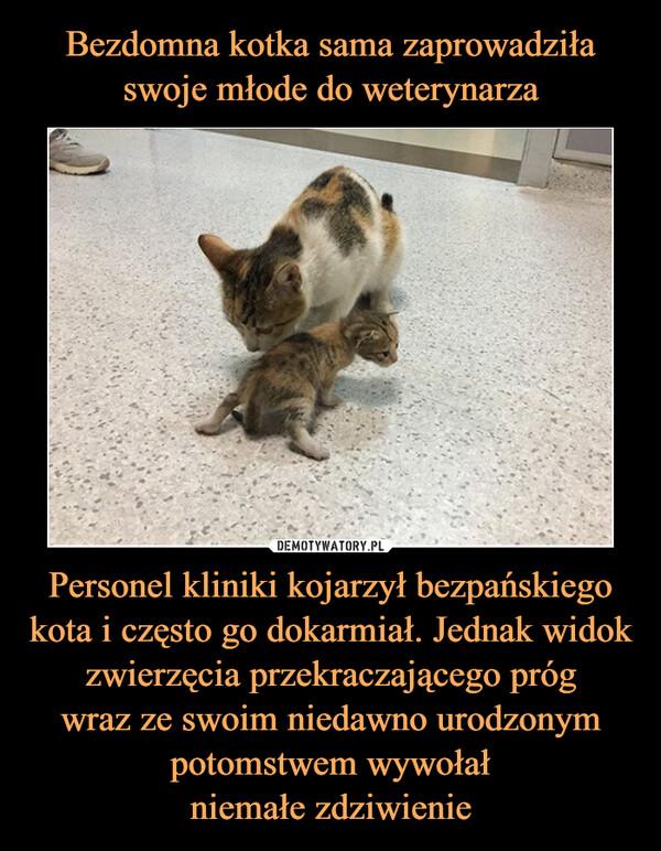 Personel kliniki kojarzył bezpańskiego kota i często go dokarmiał. Jednak widok zwierzęcia przekraczającego prógwraz ze swoim niedawno urodzonympotomstwem wywołałniemałe zdziwienie –