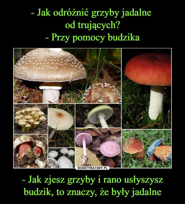 - Jak zjesz grzyby i rano usłyszysz budzik, to znaczy, że były jadalne –