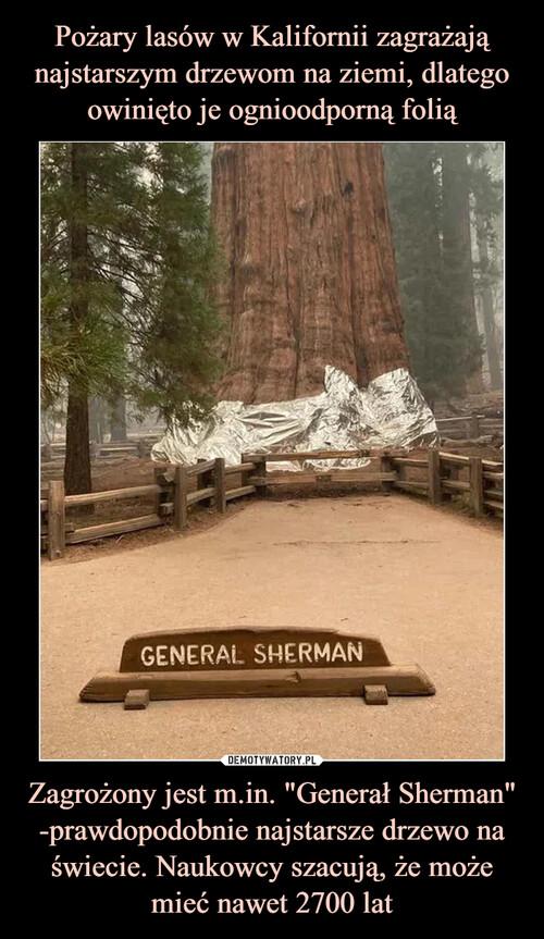 """Pożary lasów w Kalifornii zagrażają najstarszym drzewom na ziemi, dlatego owinięto je ognioodporną folią Zagrożony jest m.in. """"Generał Sherman"""" -prawdopodobnie najstarsze drzewo na świecie. Naukowcy szacują, że może mieć nawet 2700 lat"""