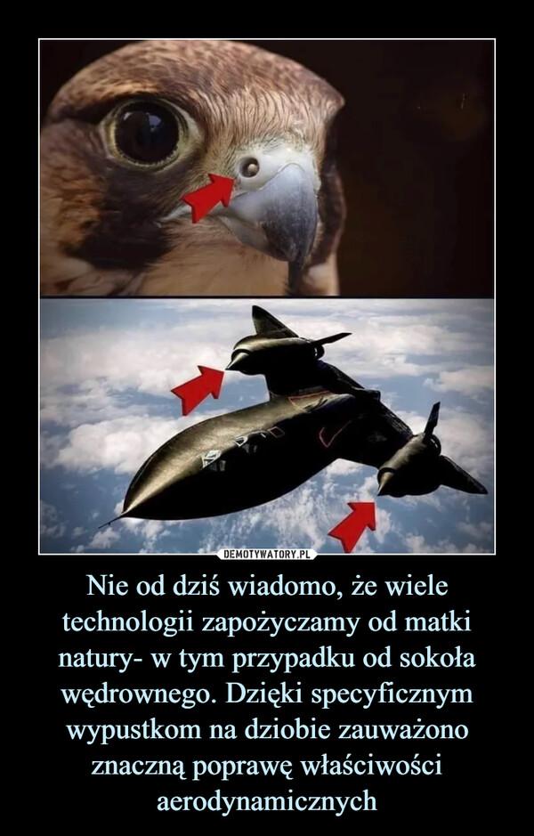 Nie od dziś wiadomo, że wiele technologii zapożyczamy od matki natury- w tym przypadku od sokoła wędrownego. Dzięki specyficznym wypustkom na dziobie zauważono znaczną poprawę właściwości aerodynamicznych –